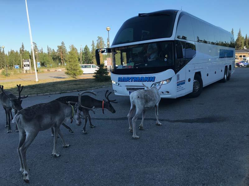 renntiere vor dem bus
